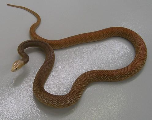 世界上最致命的蛇一点就可能让你致命